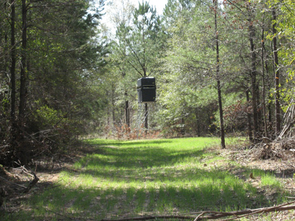 341 acres of Hunting Land / Recreational Land for sale. 283 N County Road 1, Jones, AL